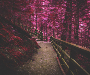 forest, tree, and beautiful image