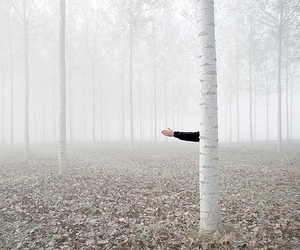 arm, forest, and white image