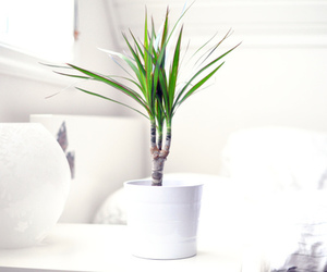 plants, home, and white image