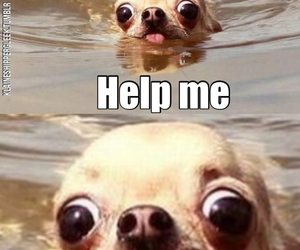 dogs, lol, and swimming image