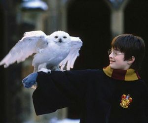 harry potter, hedwig, and daniel radcliffe image