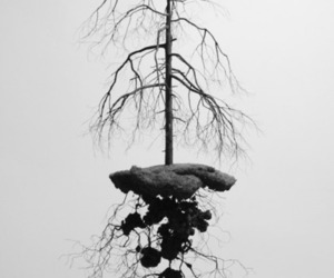 tree, art, and black and white image
