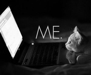 b&w, cats, and cpu image