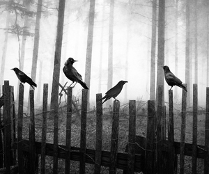 birds, creepy, and ominous image