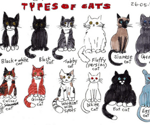 amazing, aw, and cats image