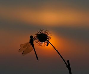 dragonfly, sunset, and wish image
