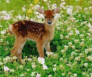 deer and flowers image