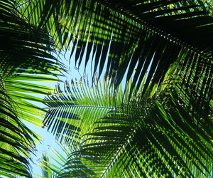 summer, green, and palm trees image