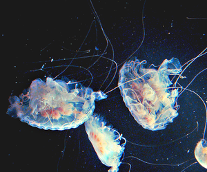 jellyfish, sea, and ocean image