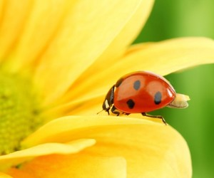 flower, yellow, and macro image