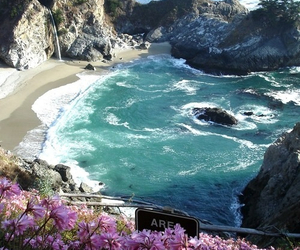 beach, flowers, and sea image