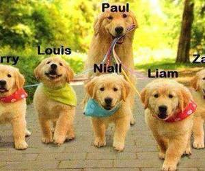 one direction, paul, and 1d image