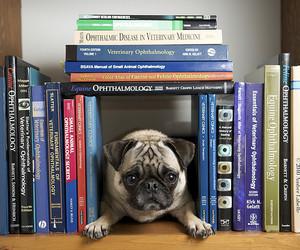 book, dog, and pug image