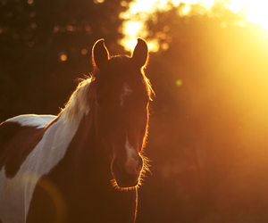 horse, beautiful, and sun image