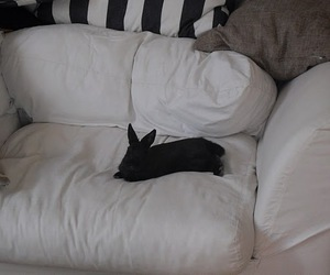 black, rabbit, and cute image