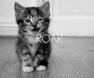 cat, roar, and cute image