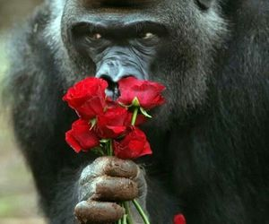 monkey, love, and awesome image