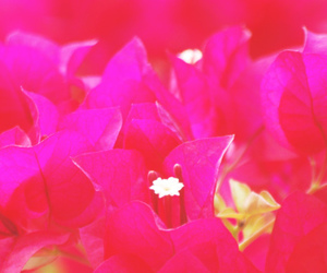 beautiful, pink flowers, and summer image