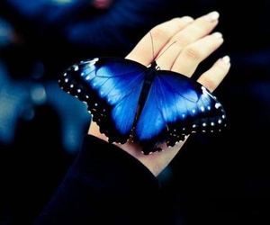 deep blue and butterfly image