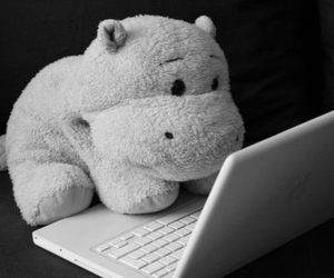 cute, hippo, and laptop image
