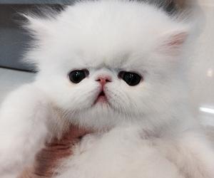 adorable, animal, and aw image