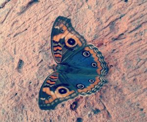 beautiful, butterfly, and colors image