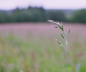 field, photography, and pink image