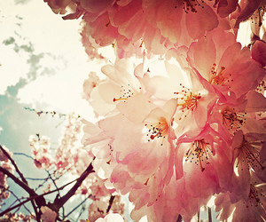 flowers, pink, and believe image