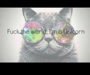 cat, unicorn, and i'm a unicorn image