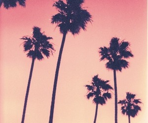 summer, pink, and palm trees image
