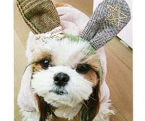 bunny, funny, and dog image