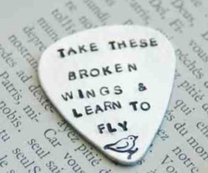 fly, wings, and broken image