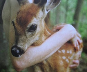 animal, bambi, and forest image