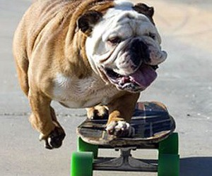 dog, skate, and skateboard image