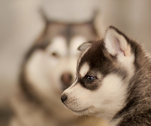animal, nice, and puppy image