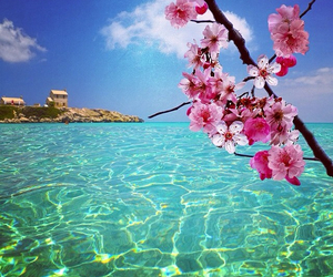 flowers, paradise, and blossom image