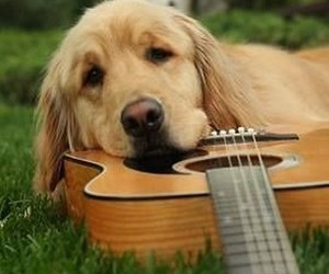dog, guitar, and puppy image