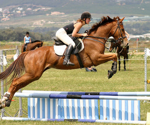 horse, jumping, and iphoto original image