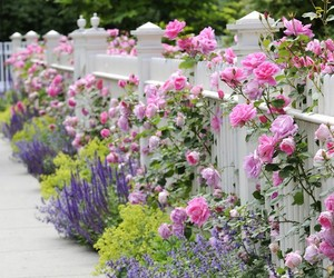 fence, garden, and roses image