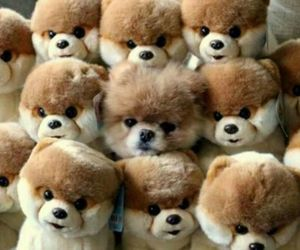 adorable, fluffy, and dogs image