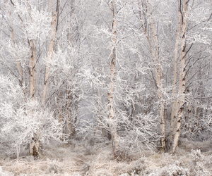 white, forest, and snow image