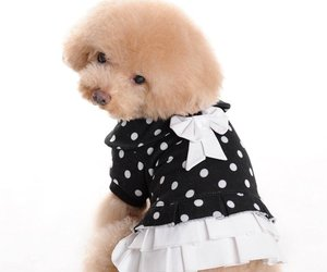 animals, blouse, and bow image