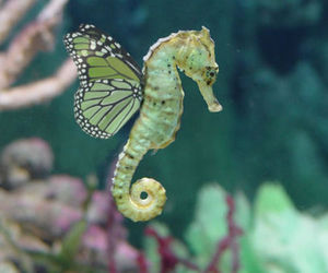 seahorse, butterfly, and wings image