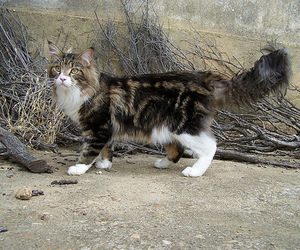 brown, cat, and cats image