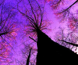 purple, tree, and pink image