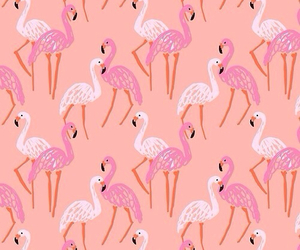 flamingo, pink, and wallpaper image