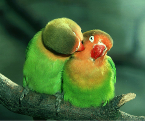 green, birds, and love image