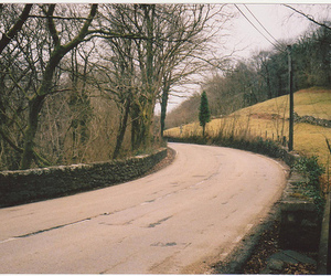 path, road, and trees image
