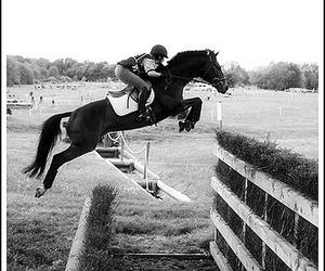 horse, Flying, and jumping image