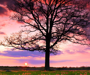 tree, pink, and love image